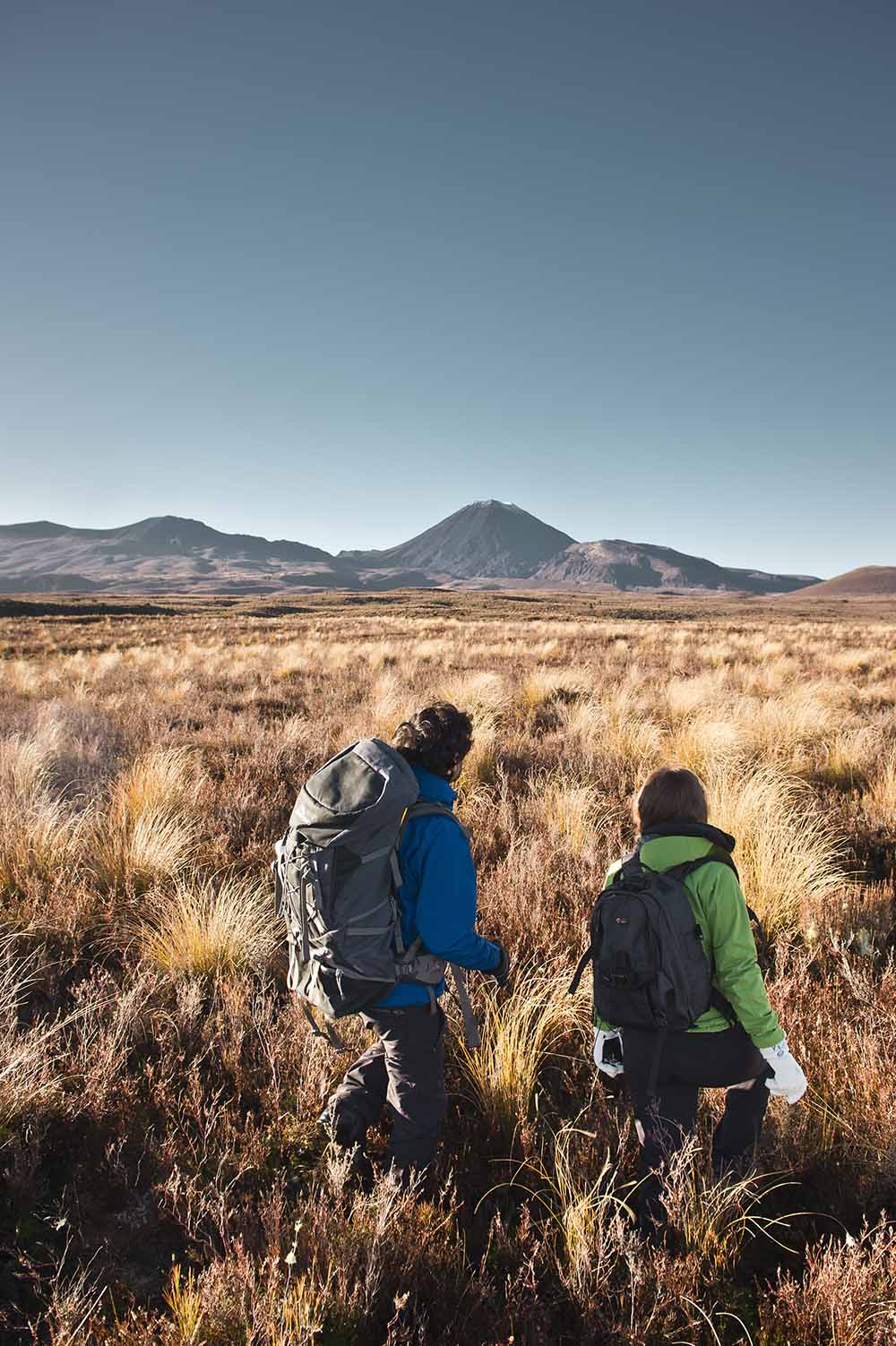 Two hikers amongst golden tussock grass with Mt Ngauruhoe and the Tongariro Alpine Crossing