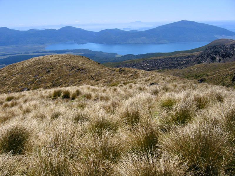 Views over golden tussock grass, Lake Rotoaira, Mt Pihanga, Mt Tihia and Mt Kakaramea from the Tongariro Alpine Crossing