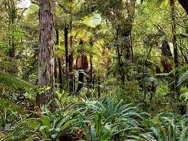 Lush Tongariro National Park rain forest